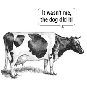 oskyldig ko