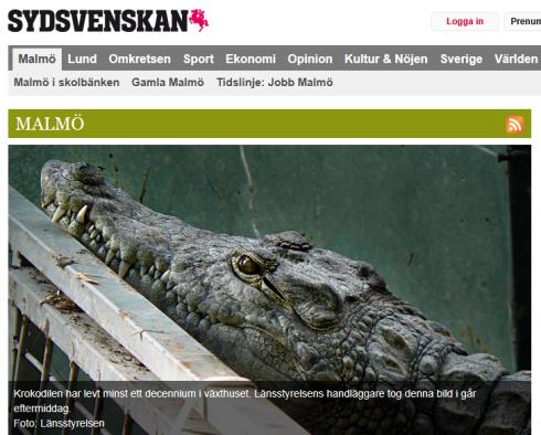 krokodil_001