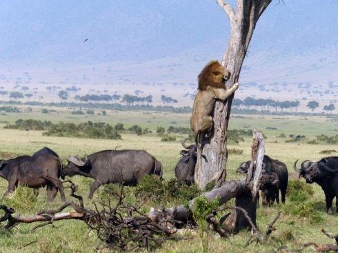 djurens konung