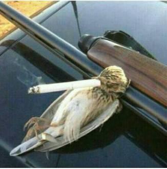 Fågel som röker