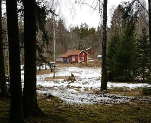 skogen1