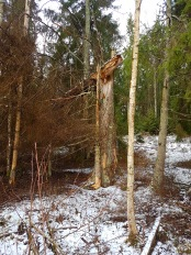 skogen13