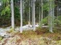 skogen16