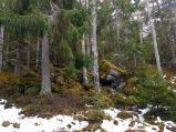 skogen20