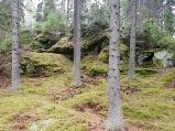 skogen5