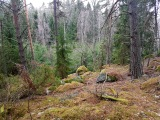 skogen7