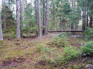 skogen8