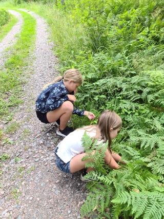 Barn plockar smultron juli 2020